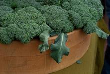 Как приготовить брокколи? Коллекция рецептов